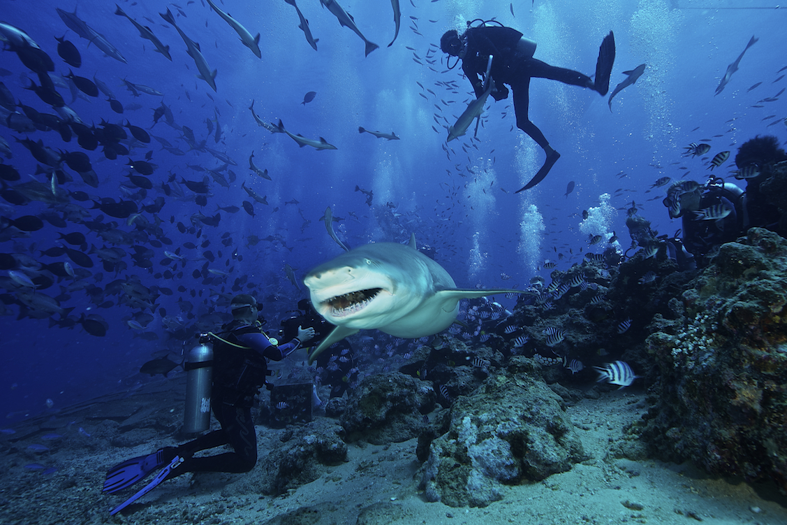 Beqa Island Fiji  city images : Diving and Snorkelling in Fiji